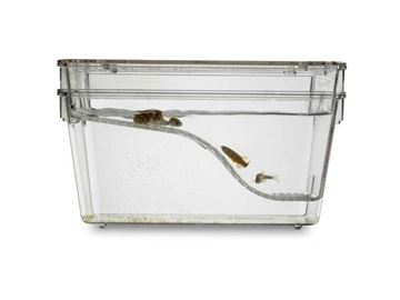Picture of 1.7 L Slope Breeding Tank - Complete Set Up